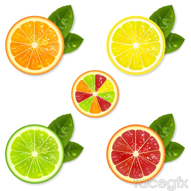 5 delicious fruit slices vector