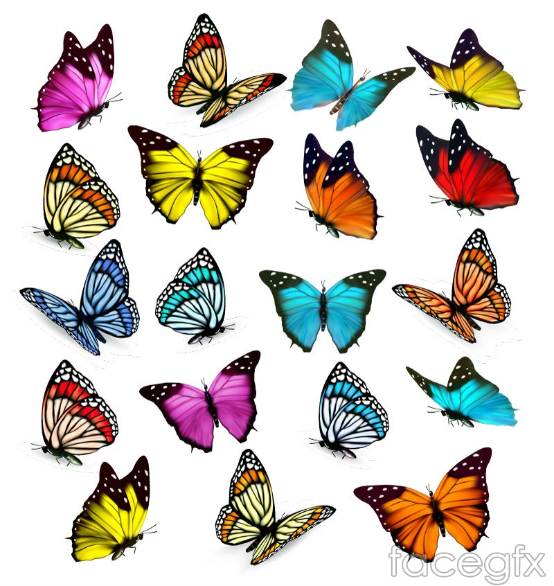 19 color Butterfly vector