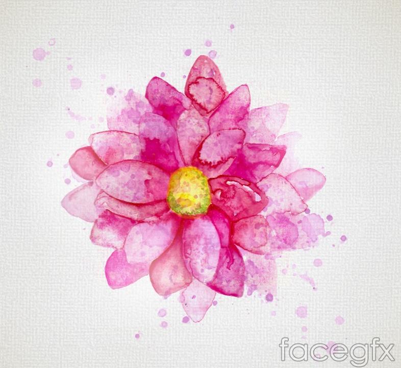 Watercolor big beautiful chrysanthemum flowers vector