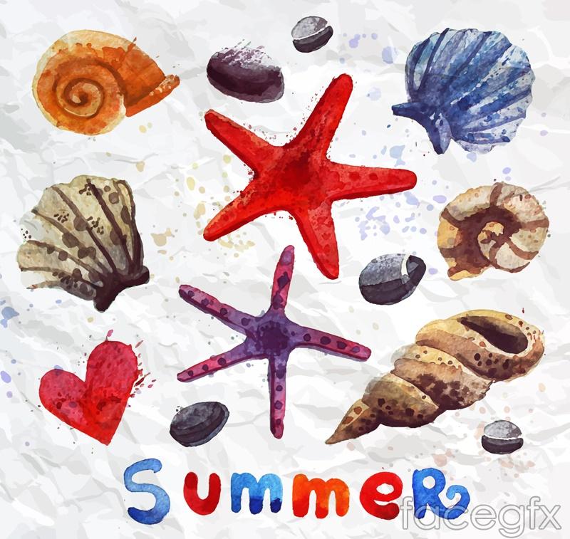 13 watercolor starfish and seashell vector diagrams