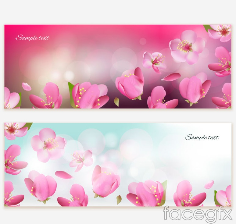 2 beautiful cherry blossom banner vector diagrams