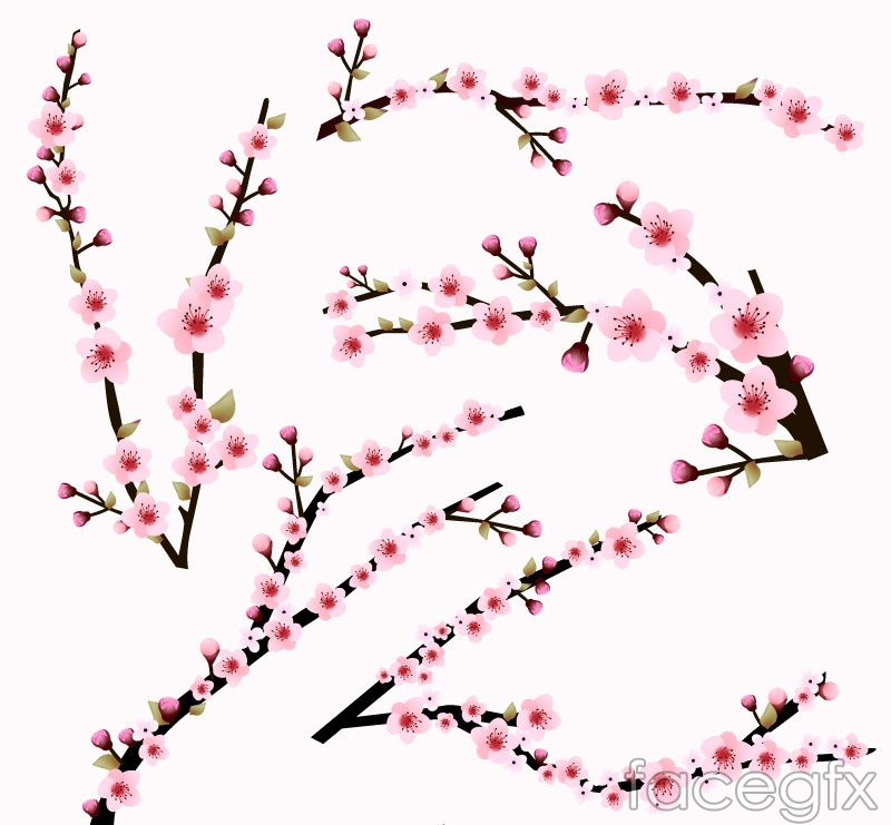 5 pink cherry blossom branch vector