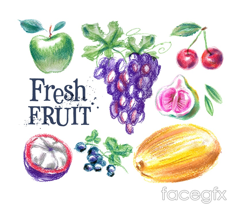 7 painted fresh fruit vector graphics