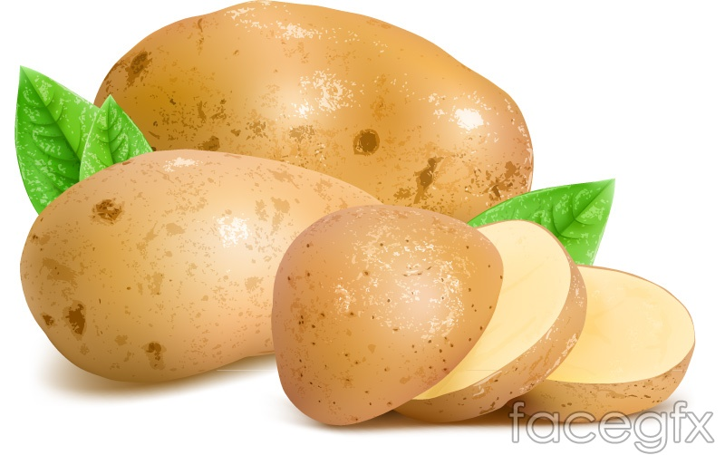 Fresh potato and slice vector