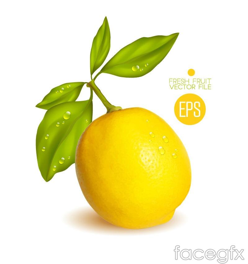 Fresh yellow lemon vectors