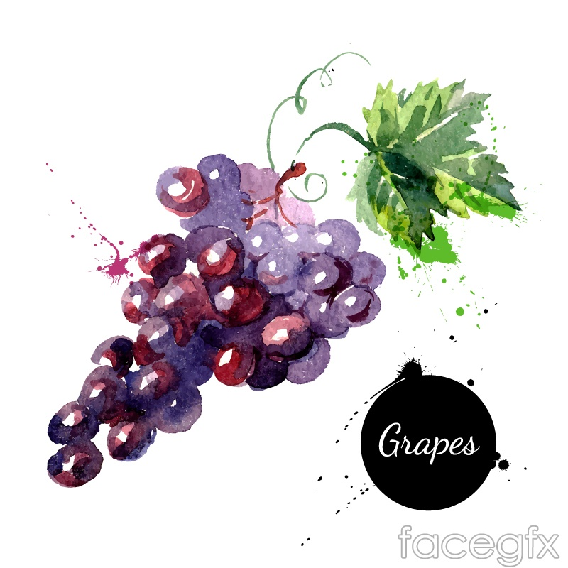 Delicious grape watercolor vector