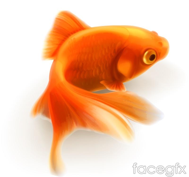 Design of realistic goldfish vector