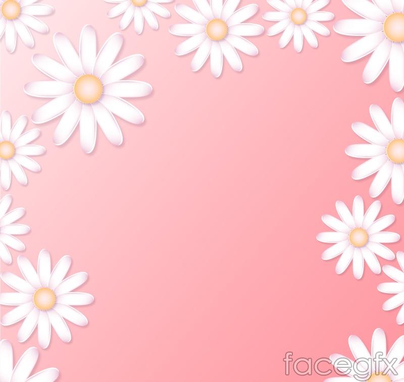 White Marguerite flower background vector