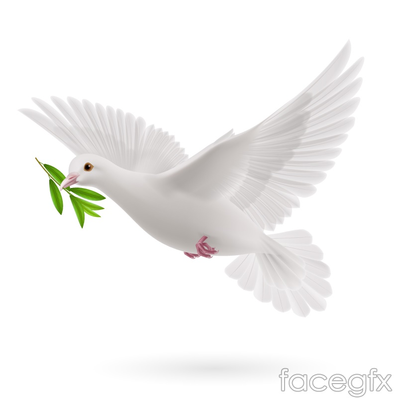 Rank olive branch the Dove vector