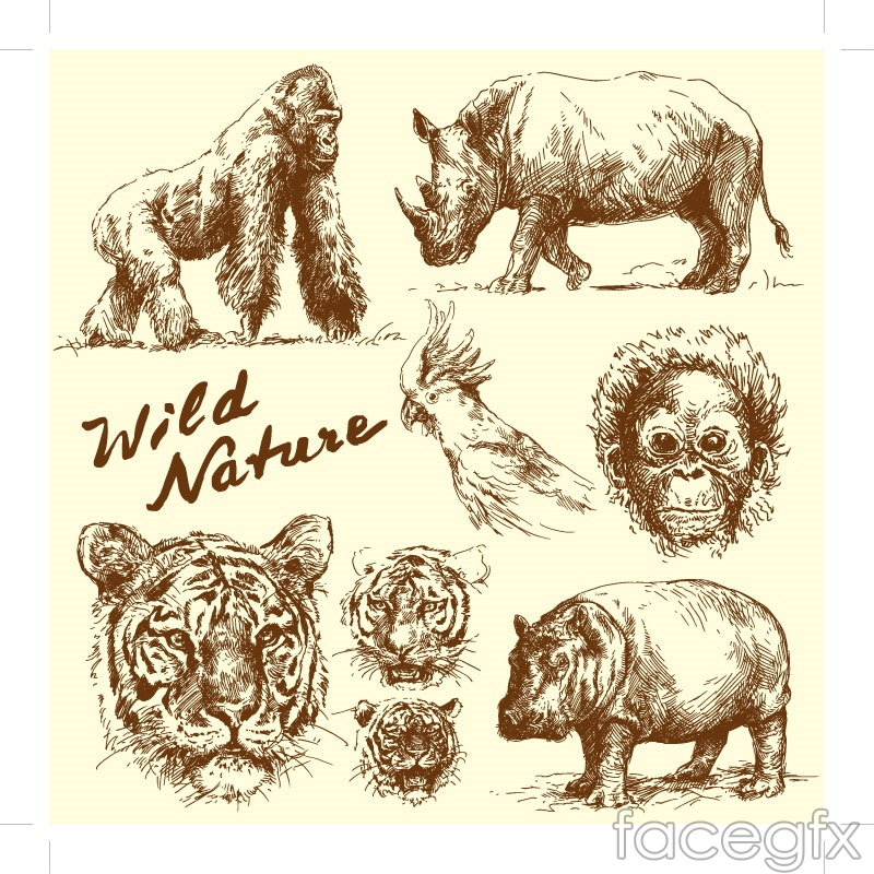 8 hand-painted wildlife vector