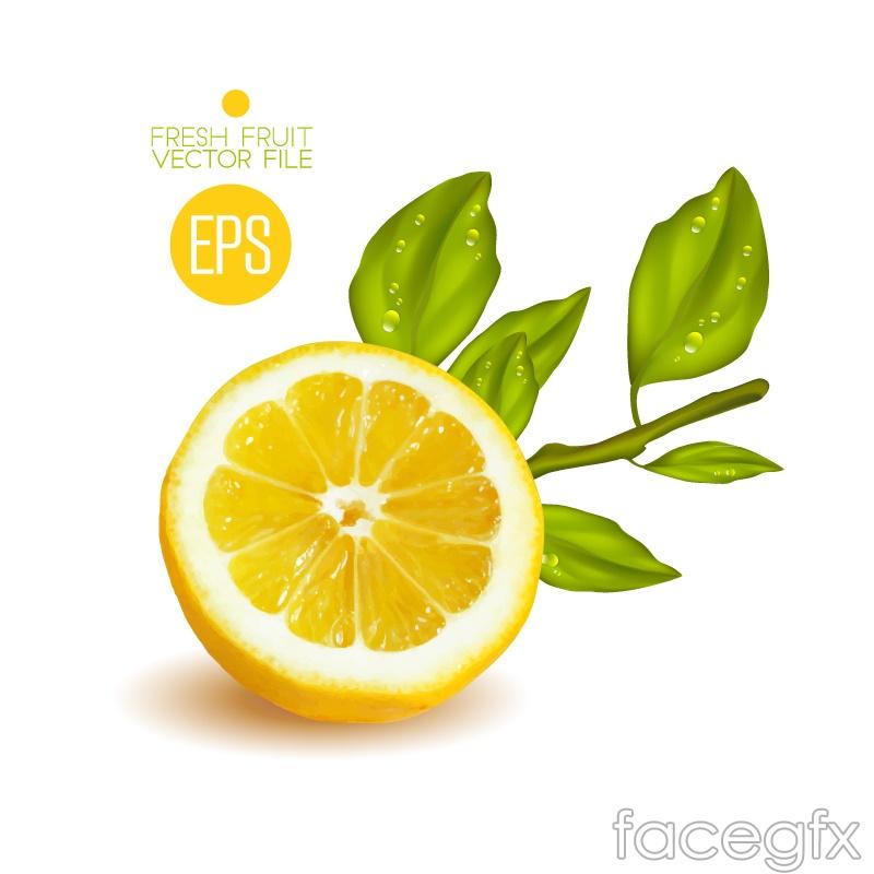 Cut the yellow lemon vector