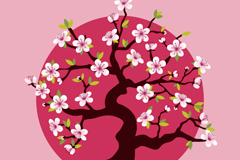 Bloom pink cherry blossom tree vector