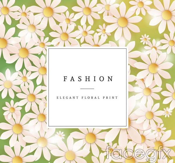 White Daisy flower card vector