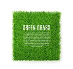 Square green lawns vector