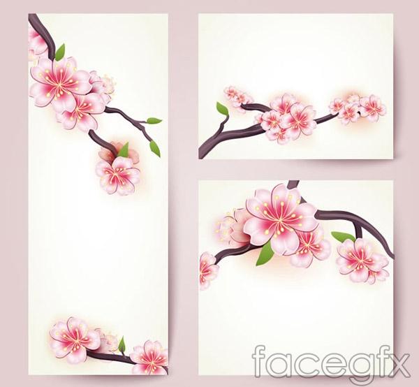Cherry Blossom flowers card vector